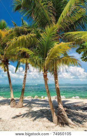Palm trees on a beach, the sea,
