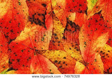 Autumn-Colours-Leaves