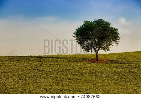 Tree Alone In The Field