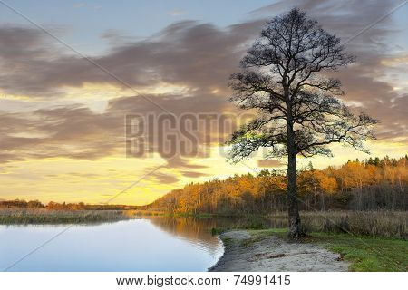 Bare Tree By Water In Autumn