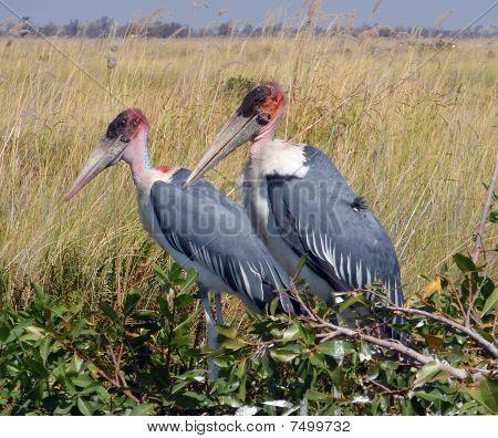 vvoltoi