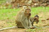 Funny monkeys in National Park Angkor Wat, Cambodia poster