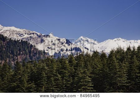 Forest with snow covered mountains in the background, Manali, Himachal Pradesh, India