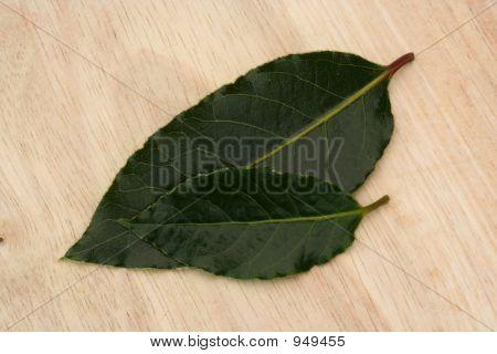 2 Bay Leaves