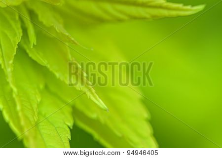 Blurred Green Leaves On A Green Background