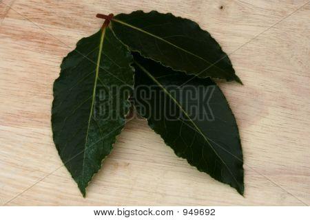 Three Bay Leaves 2
