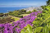 Famous Tropical Botanical Gardens in Funchal town Madeira island Portugal poster
