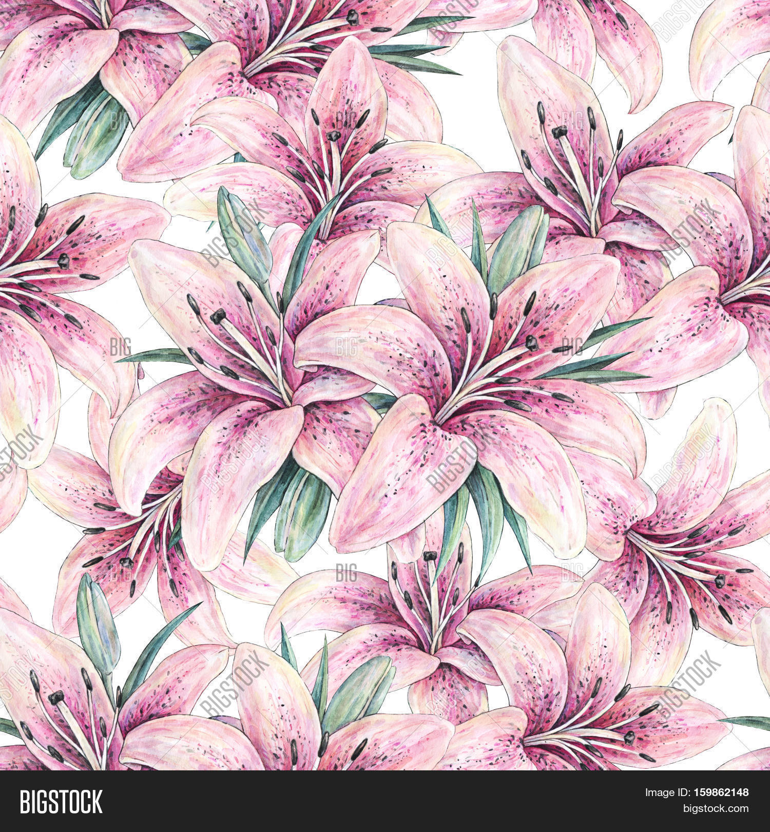 Pink lily flowers isolated on white image photo bigstock pink lily flowers isolated on white background watercolor handwork illustration drawing of blooming lily izmirmasajfo Gallery