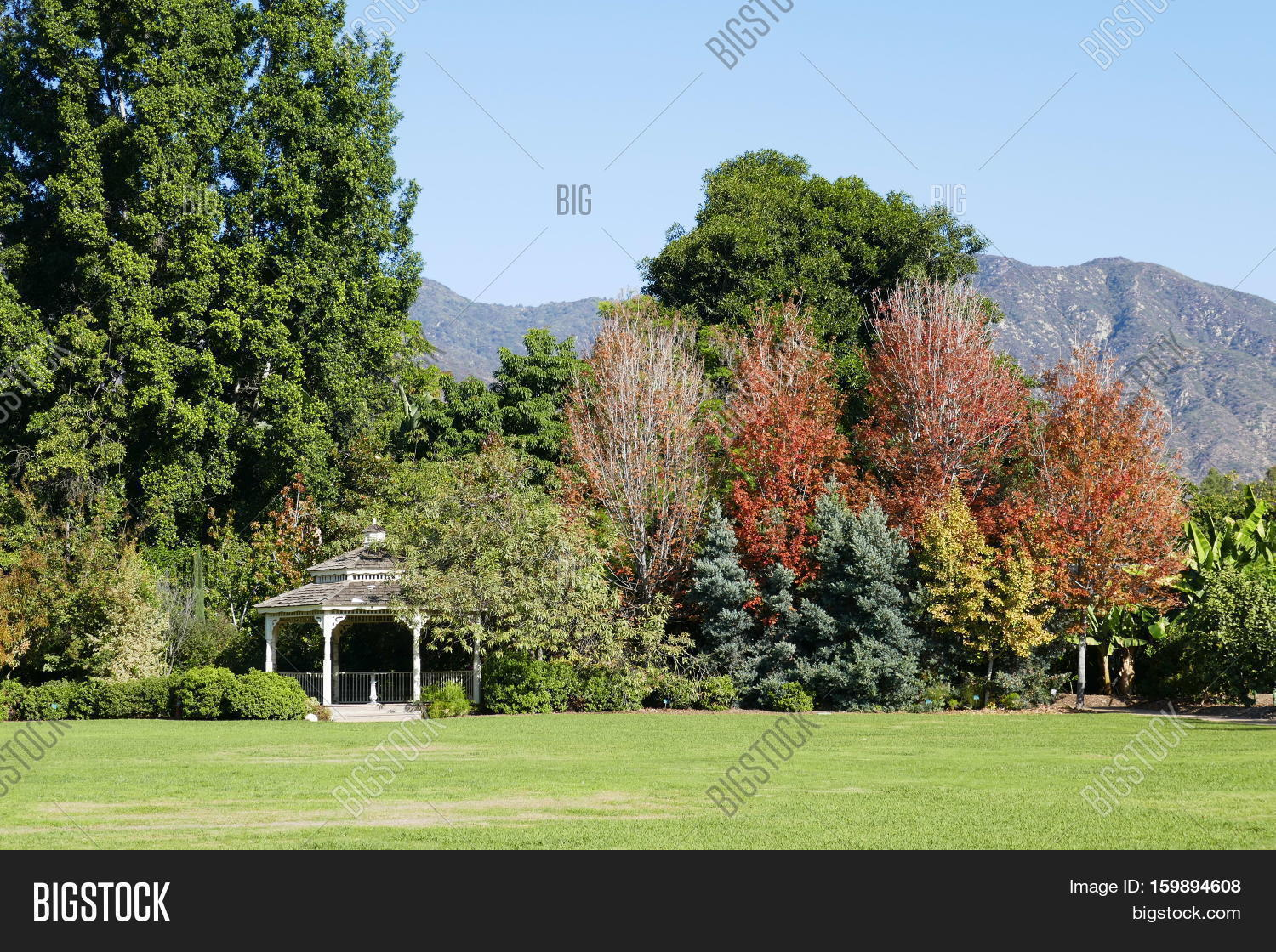 Arbor Trees Fall Color Image & Photo (Free Trial) | Bigstock