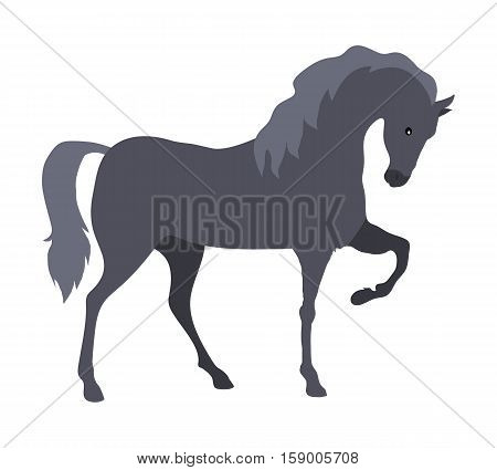 Prancing grey horse flat style vector. Domestic animal. Country inhabitants concept. Illustration for farming, animal husbandry, horse sport companies. Agricultural species. Isolated on white