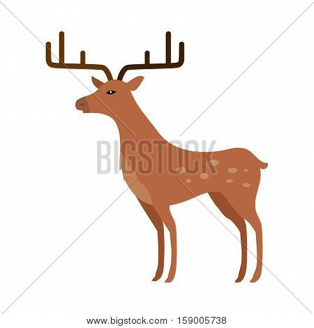 Deer isolated on white. Two main groups Cervinae, including muntjac, fallow deer and chital, and Capreolinae, including reindeer caribou, Western roe deer, and Eurasian elk moose. Cartoon deer. Vector