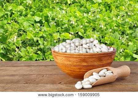 Butter beans or lima beans in bowl with wooden scoop. Dry white beans in bowl on table with green blooming field of beans on the background. Agriculture and harvest concept
