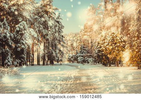 Winter park on a sunny day. Trees, road covered with snow on cold day. Natural New Year Christmas winter background. Snowfall in forest on sunny winter day. Flakes of snow winter close up in nature