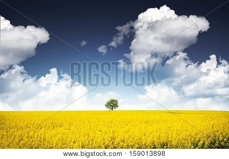 Tree at canola field, landscape, nature, clouds