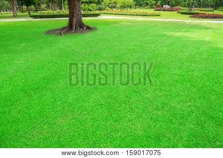 Green lawn with trees in park. Bangkok Thailand