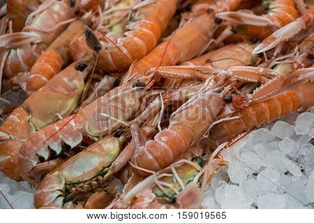 Freshly caught scampi or Norway lobster Nephrops norvegicus on the counter with ice at the greek fish shop. Scampi on ice in fish shop for sale. Horizontal. Close up. Selective focus.