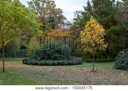 Autumn trees and round bed in a garden at the park