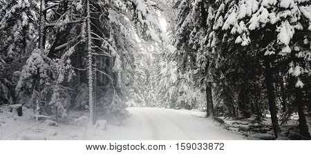 Snow Covered Trees on a Forest Path in the Jura Mountains