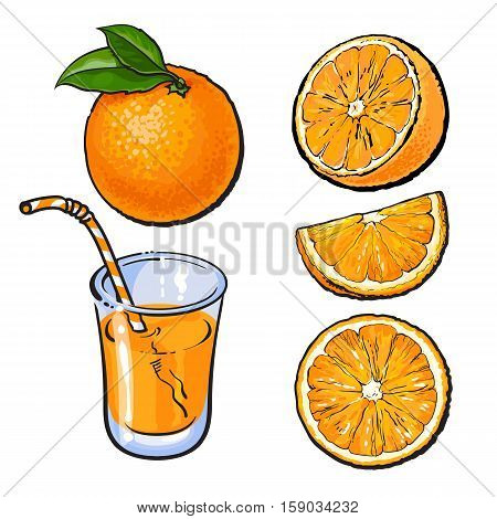 Oranges and a glass of freshly squeezed juice, sketch style vector illustration isolated on white background. Set of realistic hand drawings of whole, half and sliced ripe oranges, juice, segment