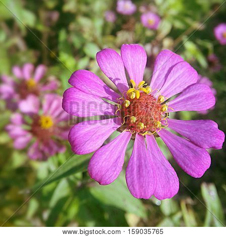 pink flower on morning time look breezy