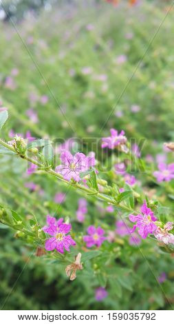 pink grass in morning time look breezy