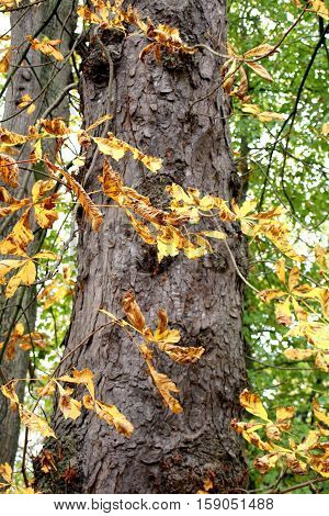 close up on a tree with autumn leaves