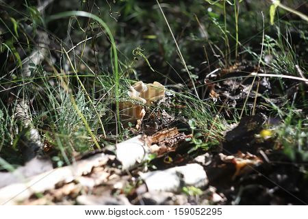 Forest mushrooms in the moss on a log