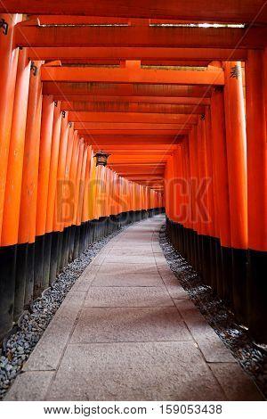 Dense rows of torii gates at Senbon Torii at Fushimi Inari Taisha in Kyoto