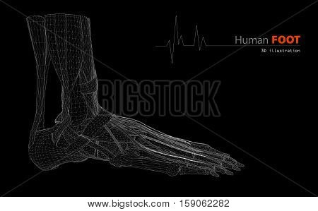 Illustration On Human Anatomy, Foot Isolated Background