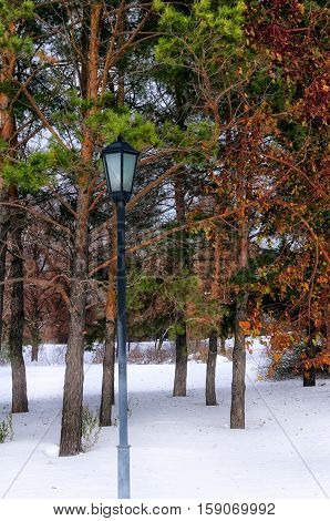 lights in winter park on a background of trees