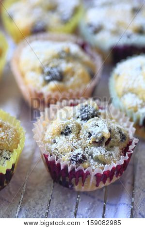 Closeup of blueberry muffins in paper cups with powdered sugar