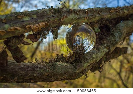 Magic crystal ball between vine branches for autumn fantasy imagery