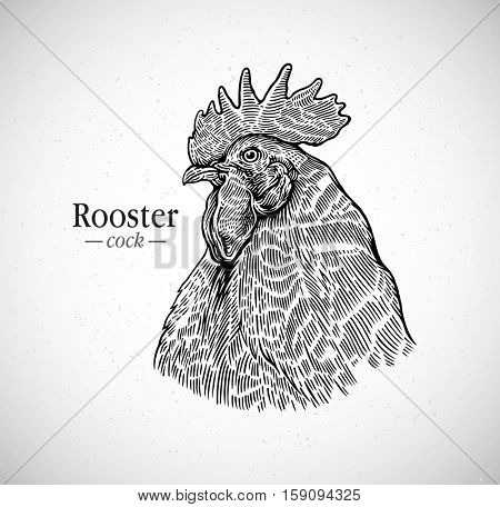 Rooster head in graphic style. Illustration drawn by hand on paper and converted to vector.
