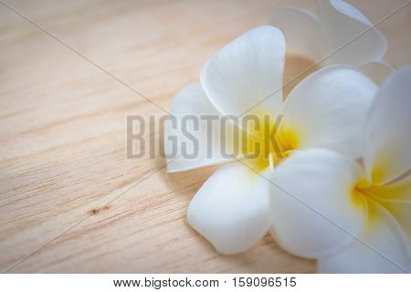 frangipani flower on a wooden background .