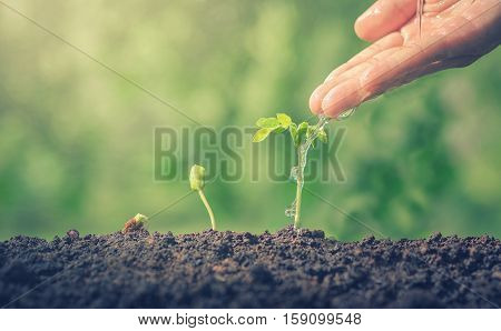 Hands watering green plants. The plant growth. Plants need water. Small plants. Plants make the world cooler. Edible plants. Plant trees make air freshener. Closeup plant on green background.