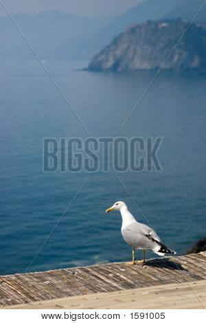 a gull flying over the Mediterranean sea - Italy poster