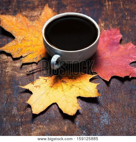Autumn background with colordul leaves and hot coffee cup.