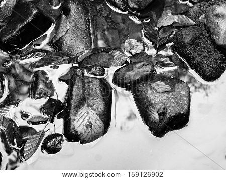 Detail Of Rotten Old Leaves  On Basalt Gravel In Mirrored Water Of Mountain Stream.