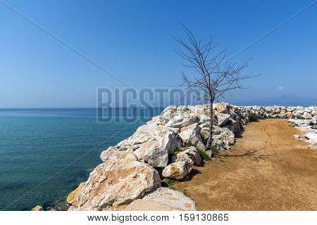 Tree on the pier of Skala Sotiros, Thassos island, East Macedonia and Thrace, Greece