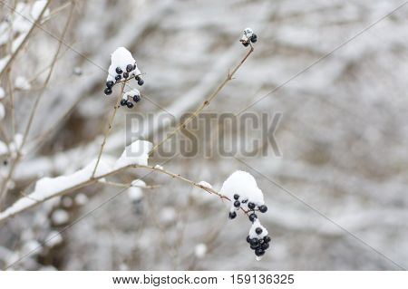 Frozen Fruit Covered With Snow
