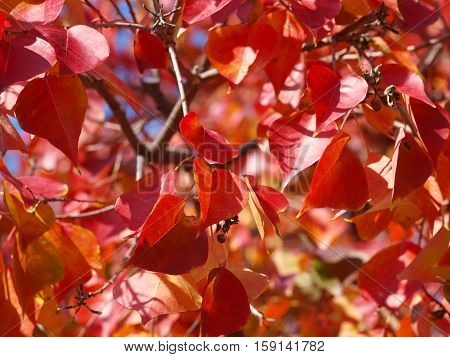 Fall reds are a favorite on the heart tree this time of year.
