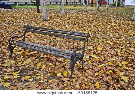 Wooden bench covered with autumn fallen leaves. Bench in front of the apartment building.
