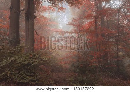 Beautiful Surreal Alternate Color Fantasy Autumn Fall Forest Landscape Conceptual Image