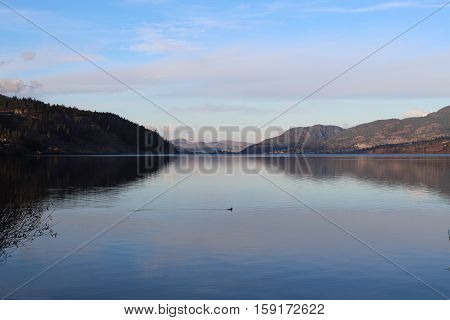 Scenic sunset sky over calm tranquil lake with mountains surrounding lake.   Sky and mountain reflections on water.   Ducks swimming in lake.  Tree branches in foreground and bright horizon background.