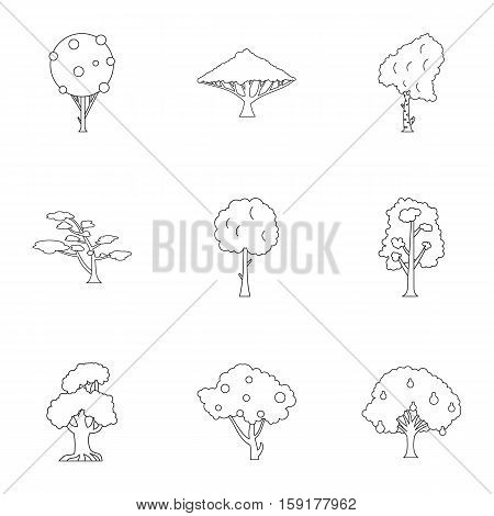 Arboreal plant icons set. Outline illustration of 9 arboreal plant vector icons for web