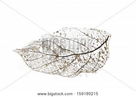 skeleton leaves and translucent texture background.airy blade bright brittle clear cobweb crystalline dead delicate design diaphanous dry fine fine-spun fragile frail framework gauzy macro.