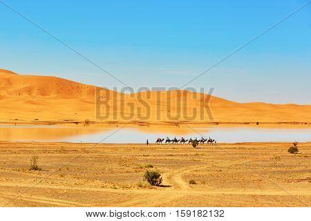 Oasis Lake In Sahara Desert, Merzouga, Africa