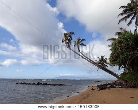 Coconut Tree hangs over rocks and beach with Gentle Waves break off shore by Hawaiian Fishpond and on Lanai visible in the distance in the state of Hawaii.