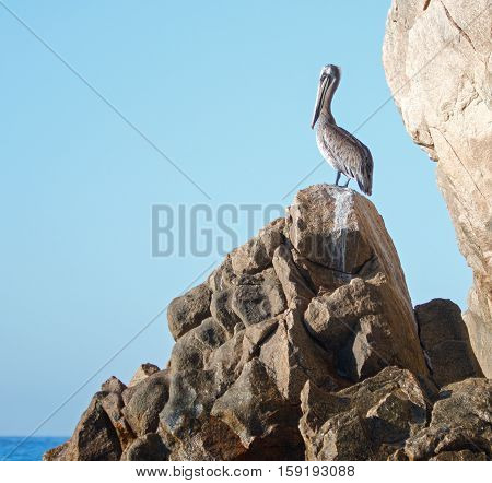 Pelican perched on Los Arcos rocks on Lands End at Cabo San Lucas Baja Mexico BCS