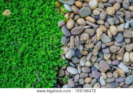 abstract background of green moss and rocks.